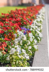 Flowers grow on a flowerbed in the middle of the city