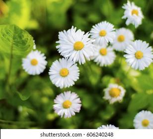 Flowers grow in a summer garden