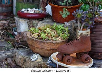 Flowers growing in an old roller skate shoe in the garden