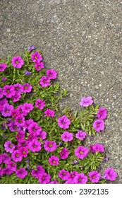 Flowers growing on pavement