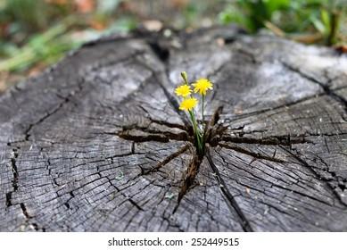 Flowers growing through stump