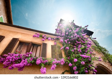 Flowers hanging from a building in Sirmione Italy