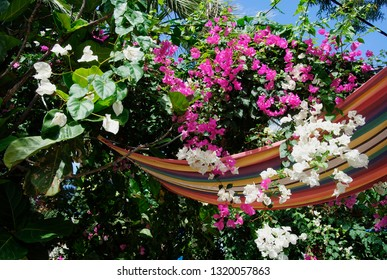 flowers hanging upside down in the alley of the palm bay in Sisi on the mediterranean isle Crete in Greece
