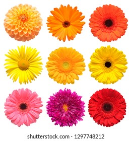 Flowers head collection of beautiful daisy, calendula, gerbera, chrysanthemum, dahlia, chamomile isolated on white background. Card. Easter. Spring time set. Flat lay, top view