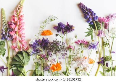 Flowers herbarium on vintage background. Floral art. Floral design. Botanical background.