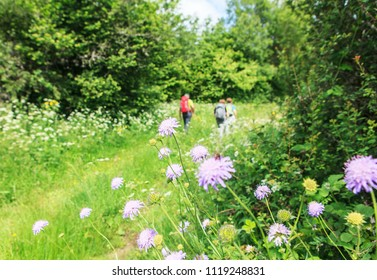 flowers and hikers