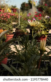 Flowers inside a floriculture. This photograph was taken in Gramado, Rio Grande do sul. March, 2016.