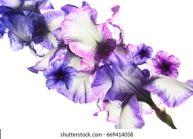 Flowers of iris and petunias on a white background. flower composition.