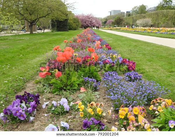 Flowers Jardin Des Plantes Paris Stock Photo (Edit Now) 792001204