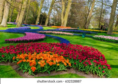 Flowers at Keukenhof garden, Holland
