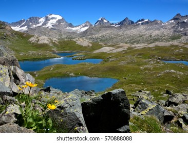 Flowers and lake on the Nivolet plane. On the background the Gran Paradiso group of mountain in the Gran Paradiso National Park