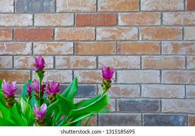 Flowers and leaves in front of the brick wall backgrounds