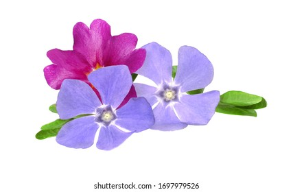 Flowers and leaves isolated on white background