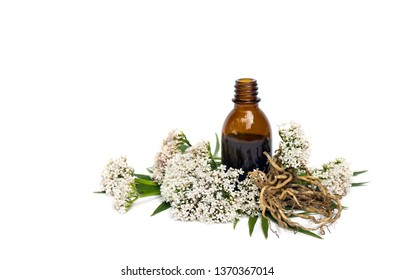 Flowers, leaves and roots Valerian (Valeriana officinalis) with pharmaceutical bottle on white background. Other names: garden valerian, garden heliotrope and all-heal