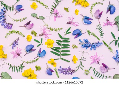 Flowers and leaves of various wild field plants on a pink background. Top view.