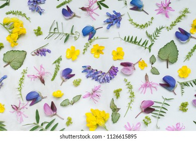Flowers and leaves of various wild field plants on a marble background. Top view.