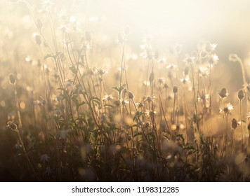 Flowers and light.