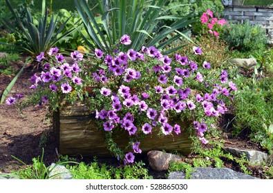 Flowers in Log