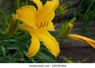 Flowers macro, summer