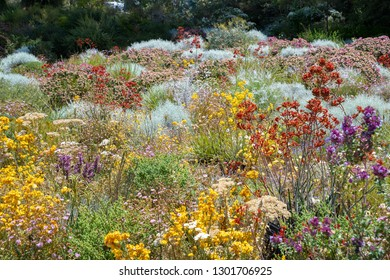Flowers in many colors in Perth botanical garden with its collection of West Australia