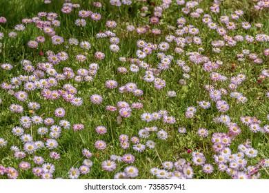 Flowers  in meadows