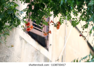 Flowers in a Mediterranean garden, traditional window in the background. Selective focus.
