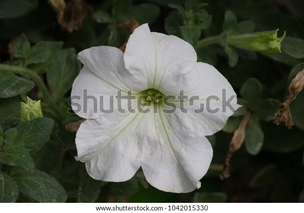Flowers from Miracle Garden, Dubai, UAE