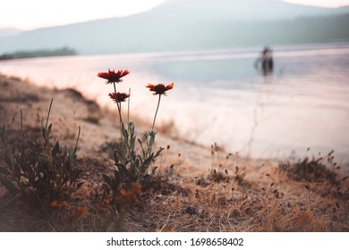 Flowers in a moody red sunset