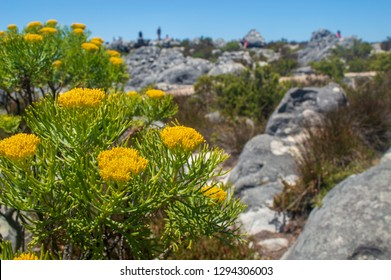 Flowers at the Mountain Top