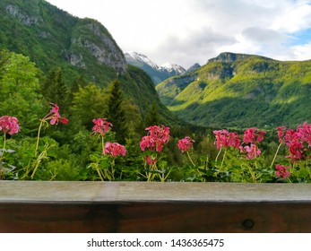 flowers and mountains in slovenia