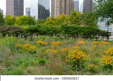 Flowers and Native Plants at a Park in Streeterville Chicago with Skyscrapers