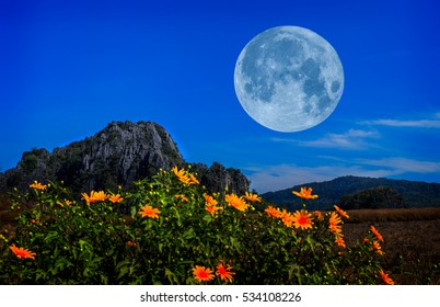 flowers near the forest at the foot of the mountain at night in full moon light