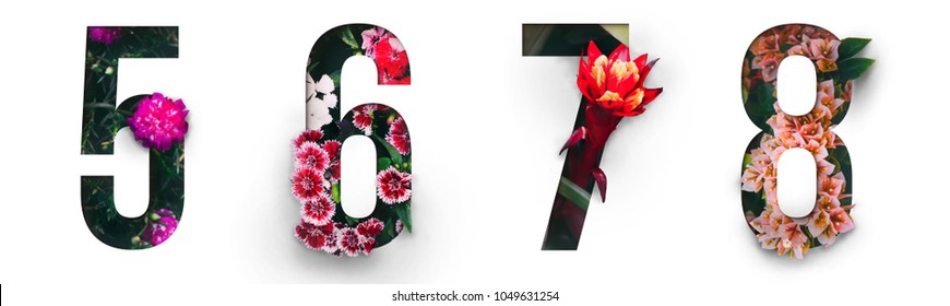 Flowers number 5, 6, 7, 8 made of Real alive flower with Precious paper cut shape of number. Collection of brilliant flora number for your unique decoration  in spring, summer or several concept ideas