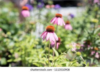 Flowers at Nursery