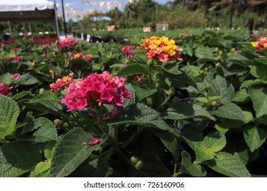 flowers in a nursery
