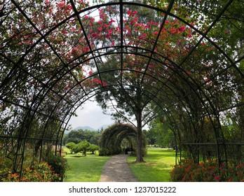Flowers in Nusantara Flower Garden, Puncak West Java Indonesia