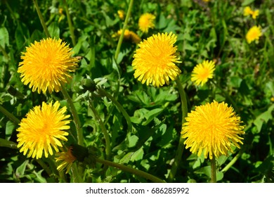 Flowers on the background of leaves