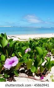 Flowers on a beach in Reunion island