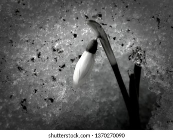 Flowers on a black and white photo