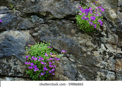 flowers on cliff in butchart gardens, british columbia, canada