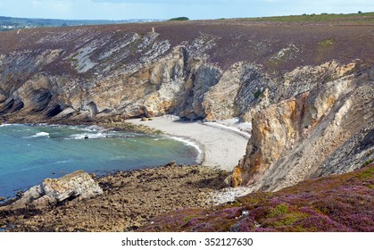 Flowers on a coast along sea in summer