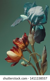 flowers on a dark green background, bouquet, iris and tulip,