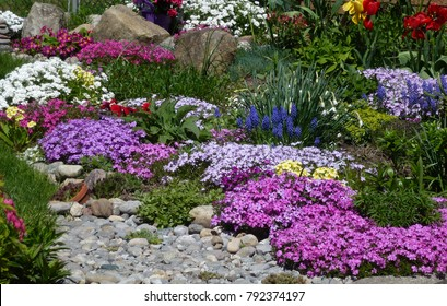Flowers On The Flower Bed