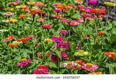 Flowers on a flowerbed in the park close-up as a background