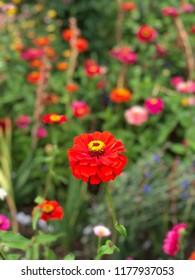 flowers on garden in spring