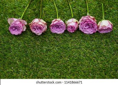 Flowers on grasss