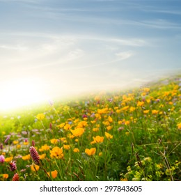 flowers on a green hill slope