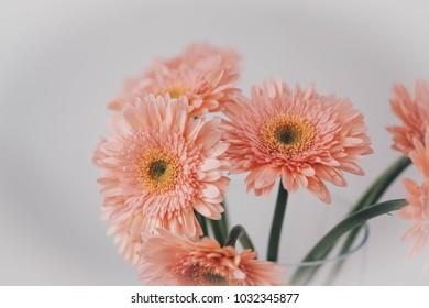 flowers on grunge white background