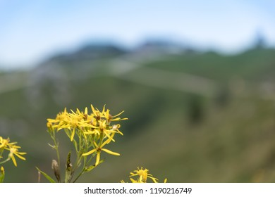 Flowers on Kampenwand in Bavaria Alps in Summer