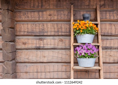 Flowers on ladder shelf lean to wooden wall outside